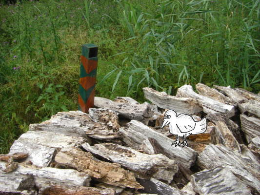 Anansi ontdekt met zijn gecamoufleerde periscoop een merkwaardig vogeltje